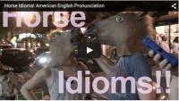 Horse Idioms!