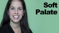 Soft Palate and Other Parts of the Mouth